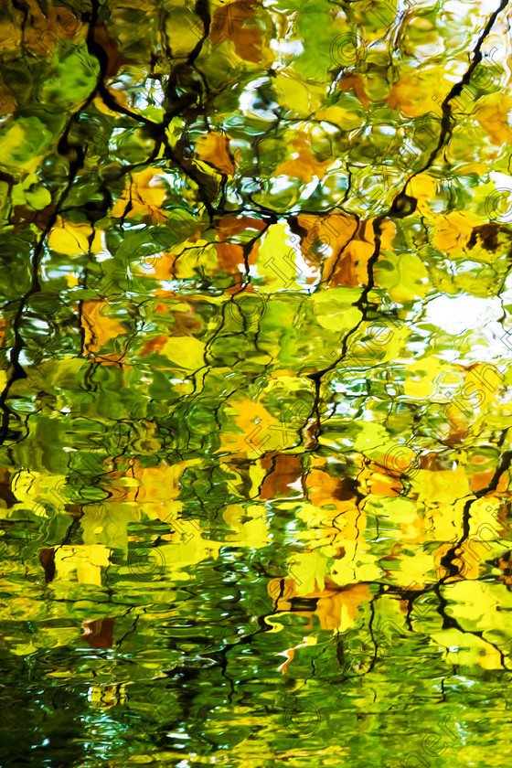 autumnleavesabstract 