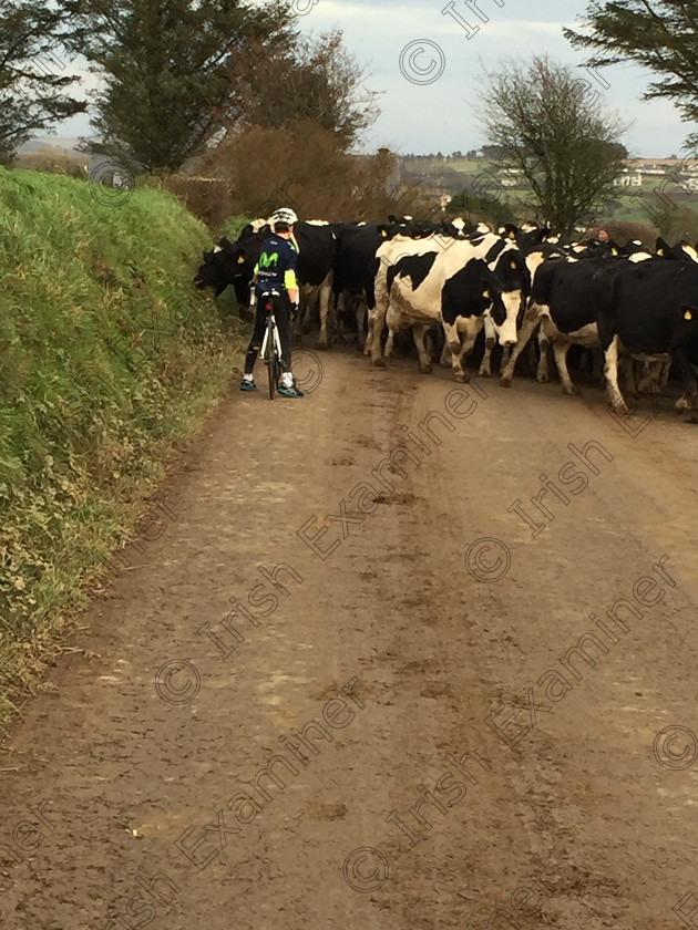 IMG 6839 