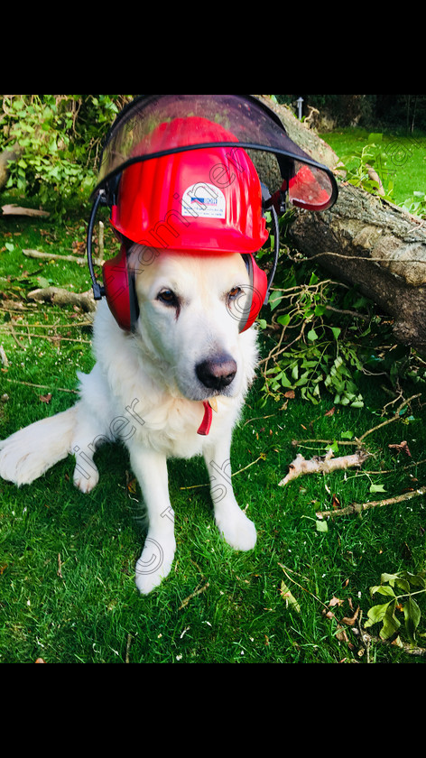 Jessie 25.9.2018 Irish Examiner 