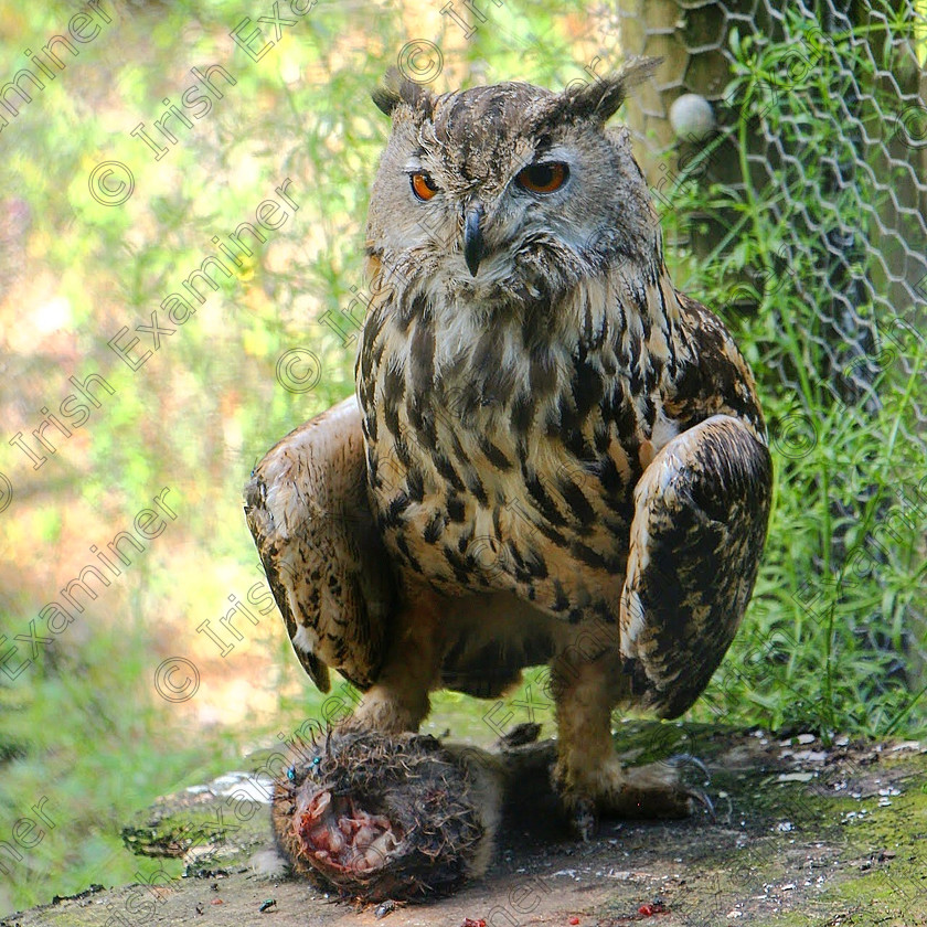 IMG 20181110 180226 590 