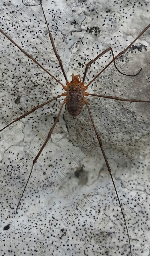 20170703 130917-1 