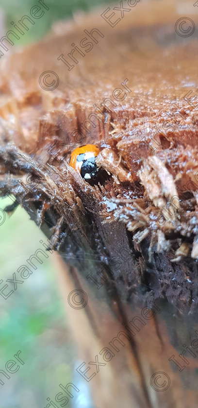 20181031 105903 