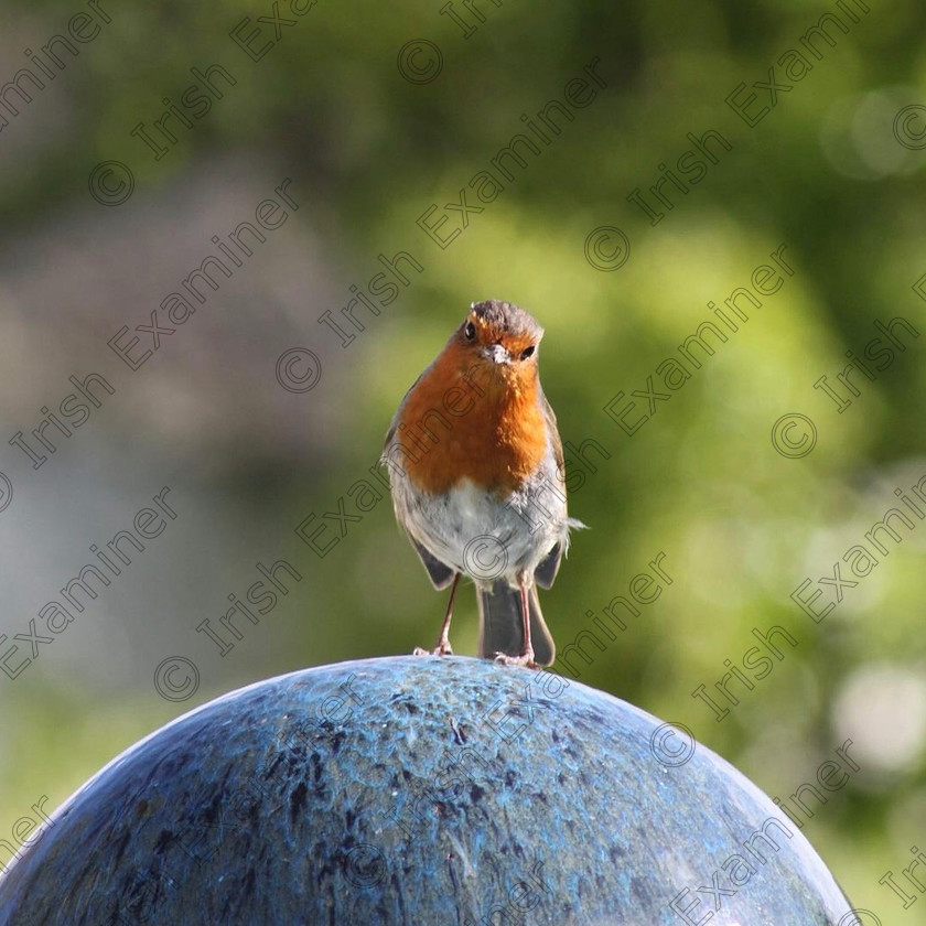 29EE8822-10FF-4794-A626-7AA641C9F689 